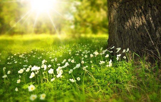 Power of Gratitude and Forgiveness